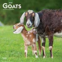 Goats 2020 Square Wall Calendar by Inc Browntrout Publishers
