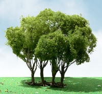 JTT: H0 Scale Privet Tree - Single Pack