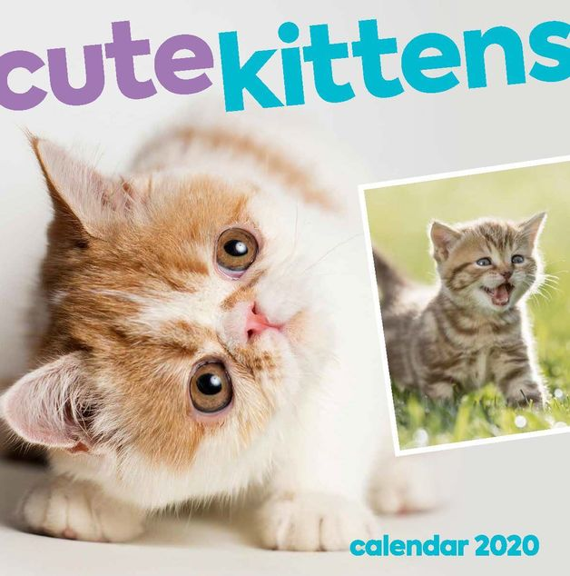 Cute Kittens 2020 Square Wall Calendar