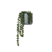 General Eclectic Artificial Plant - String of Pearls (Small - 50cm)