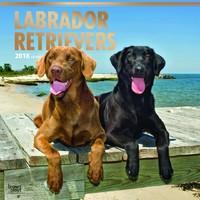 Labrador Retrievers 2018 Square Wall Calendar