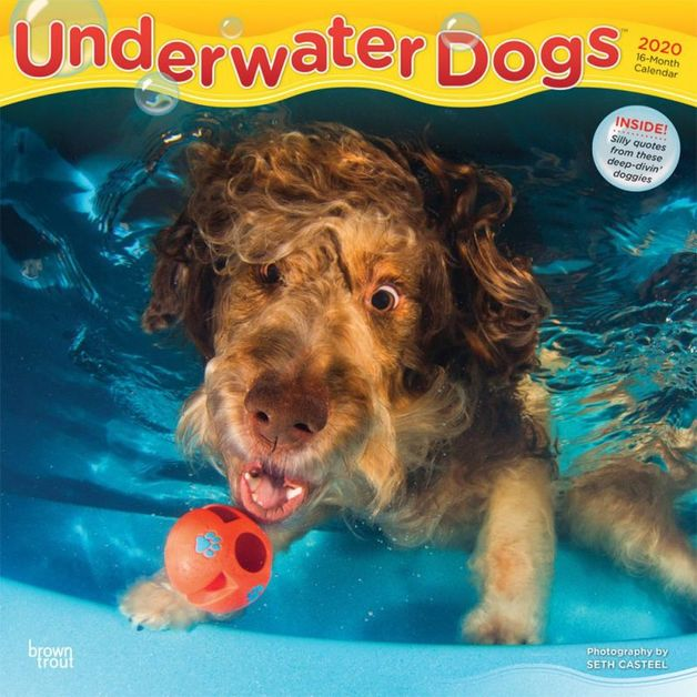 Underwater Dogs 2020 Square Wall Calendar