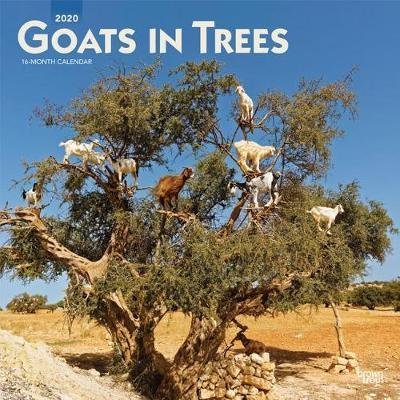 Goats in Trees 2020 Square Wall Calendar